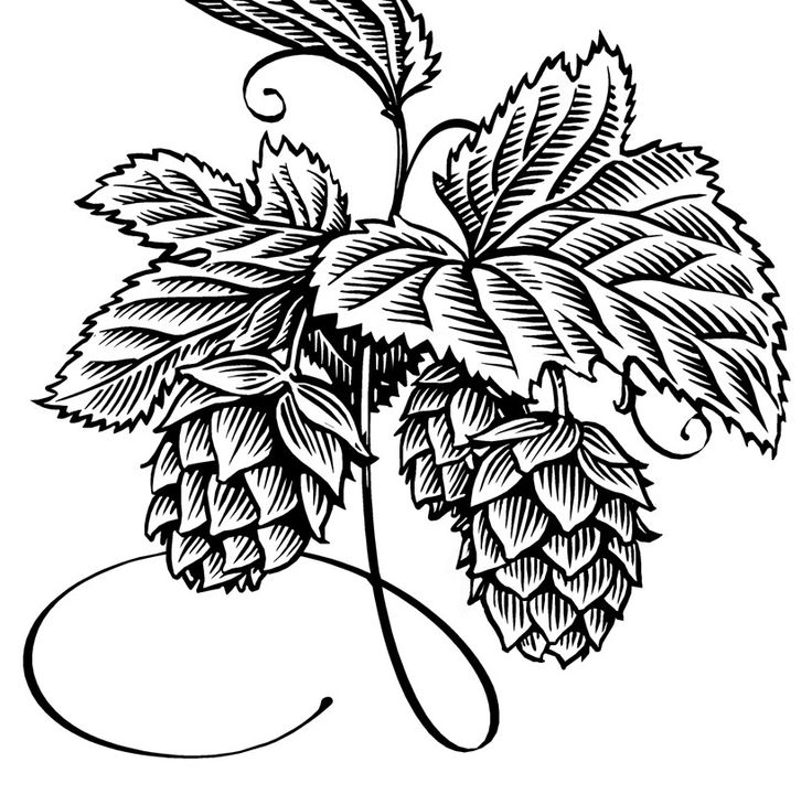 1000+ images about hops and barley on Pinterest.