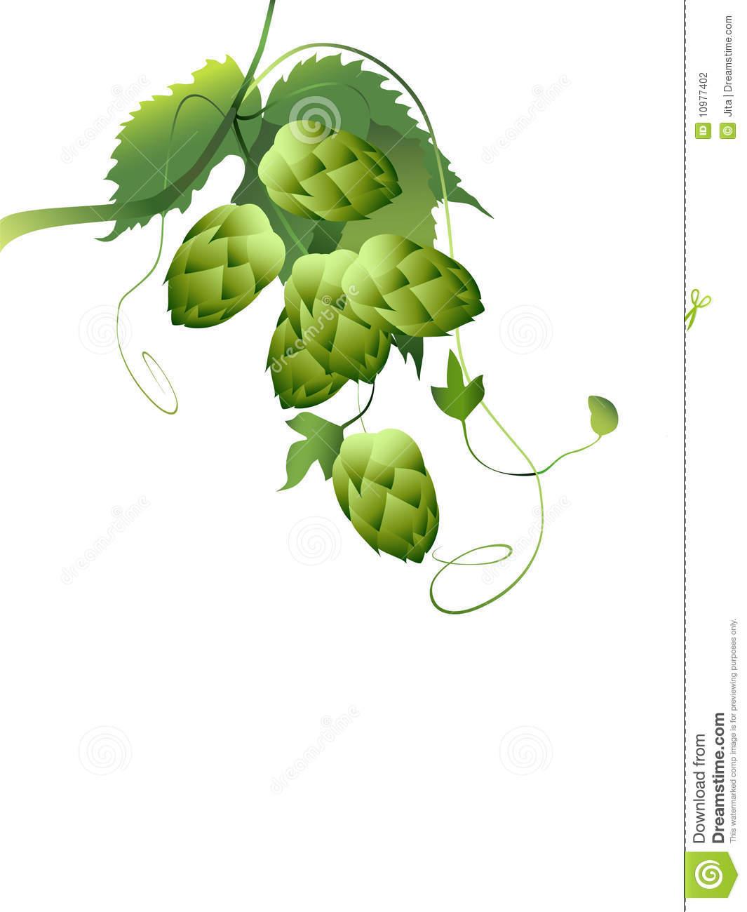 Beer Hops Vine Clipart.