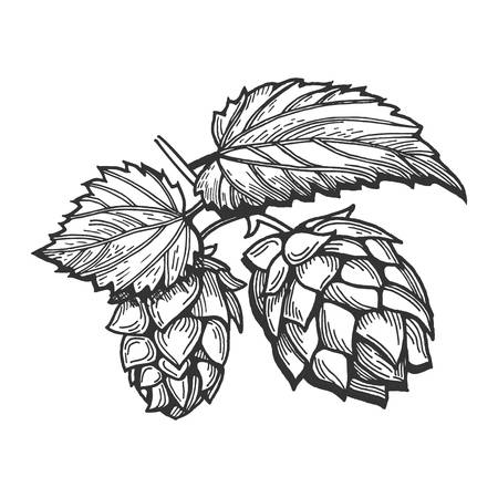 6,812 Hops Cliparts, Stock Vector And Royalty Free Hops Illustrations.