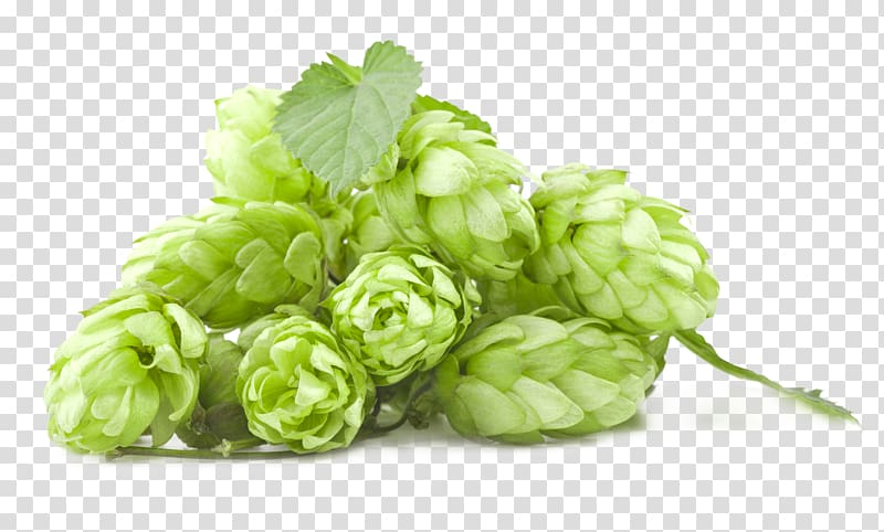 Stem of green rosebuds , Beer Brewing Grains & Malts India pale ale.