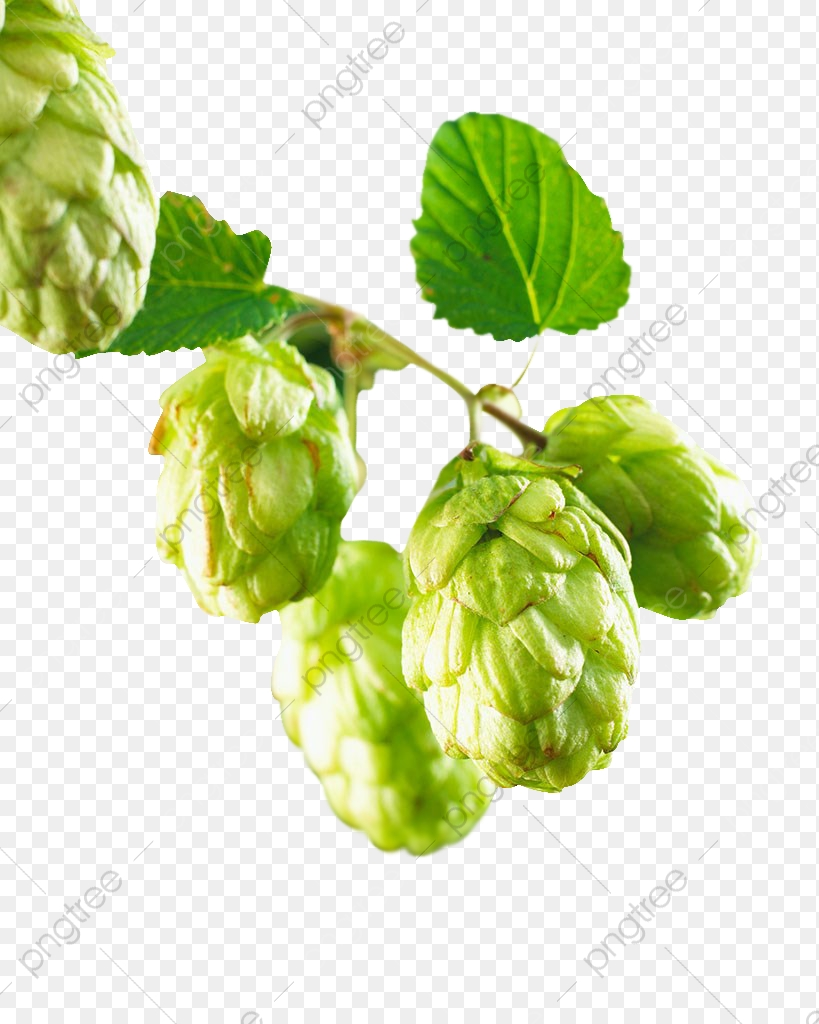 Hops, Mulberry, Fruit PNG Transparent Image and Clipart for Free.