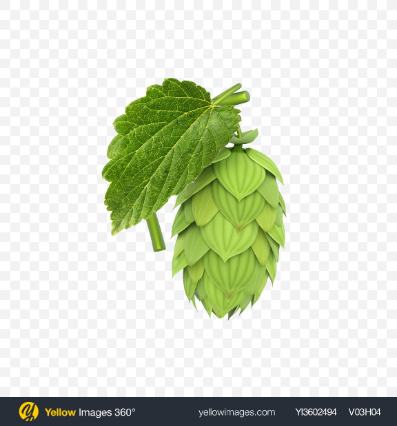 Download Hop Transparent PNG on Yellow Images 360°.