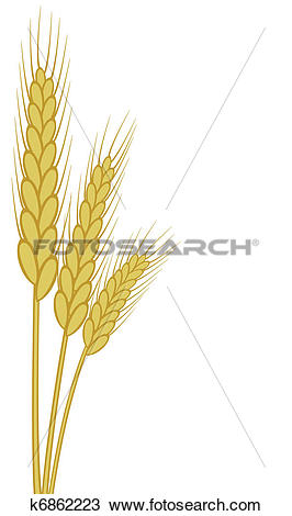 Clipart of wheat ears k6862223.