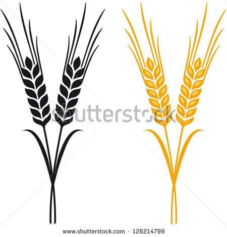 Ears Of Wheat Barley Or Rye Common Barley Or Hordeum.