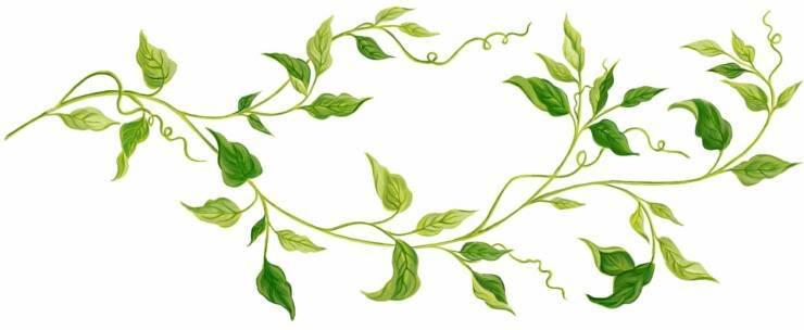 Horizontal vine clipart green.