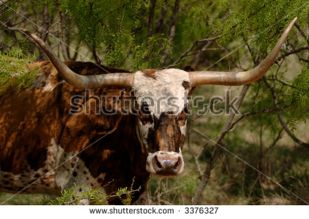 Mesquite Tree Stock Images, Royalty.