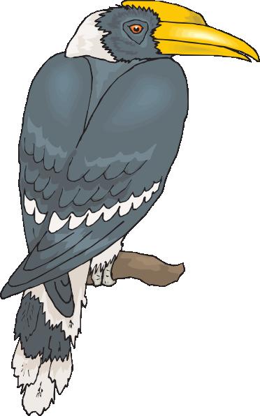 Perched Hornbill Clip Art at Clker.com.