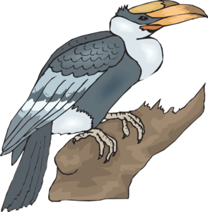 Hornbill On A Branch Clip Art at Clker.com.