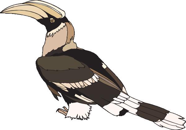 Staring Hornbill Clip Art at Clker.com.