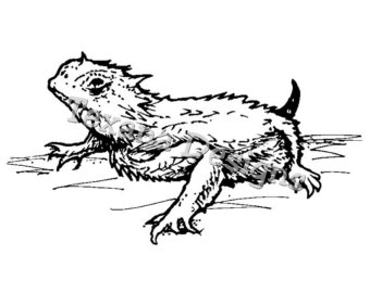 Horned lizard clipart.