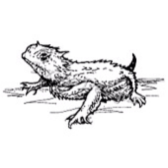 82 best images about Horny Toad / Horned Lizard on Pinterest.
