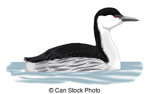 Grebe Illustrations and Clipart. 118 Grebe royalty free.