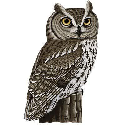 Horned owl clipart 2 » Clipart Portal.