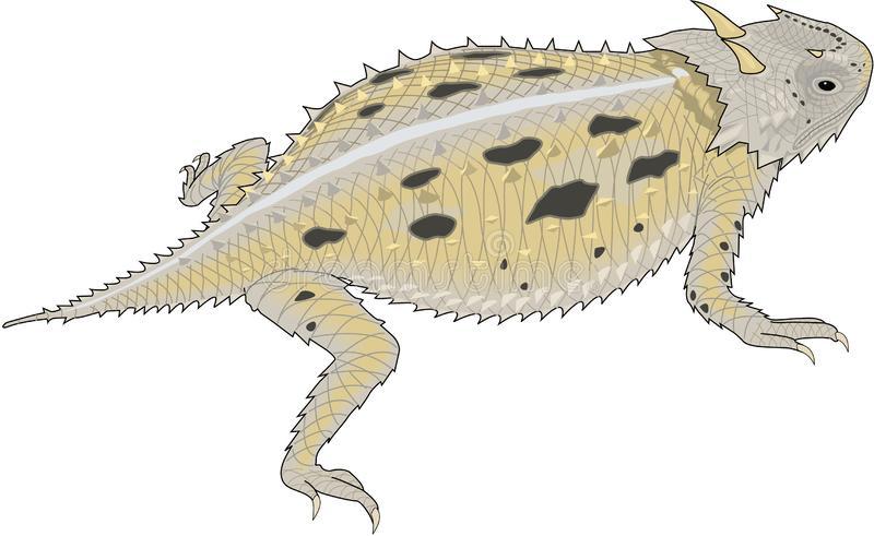 Horned Lizard Stock Illustrations.