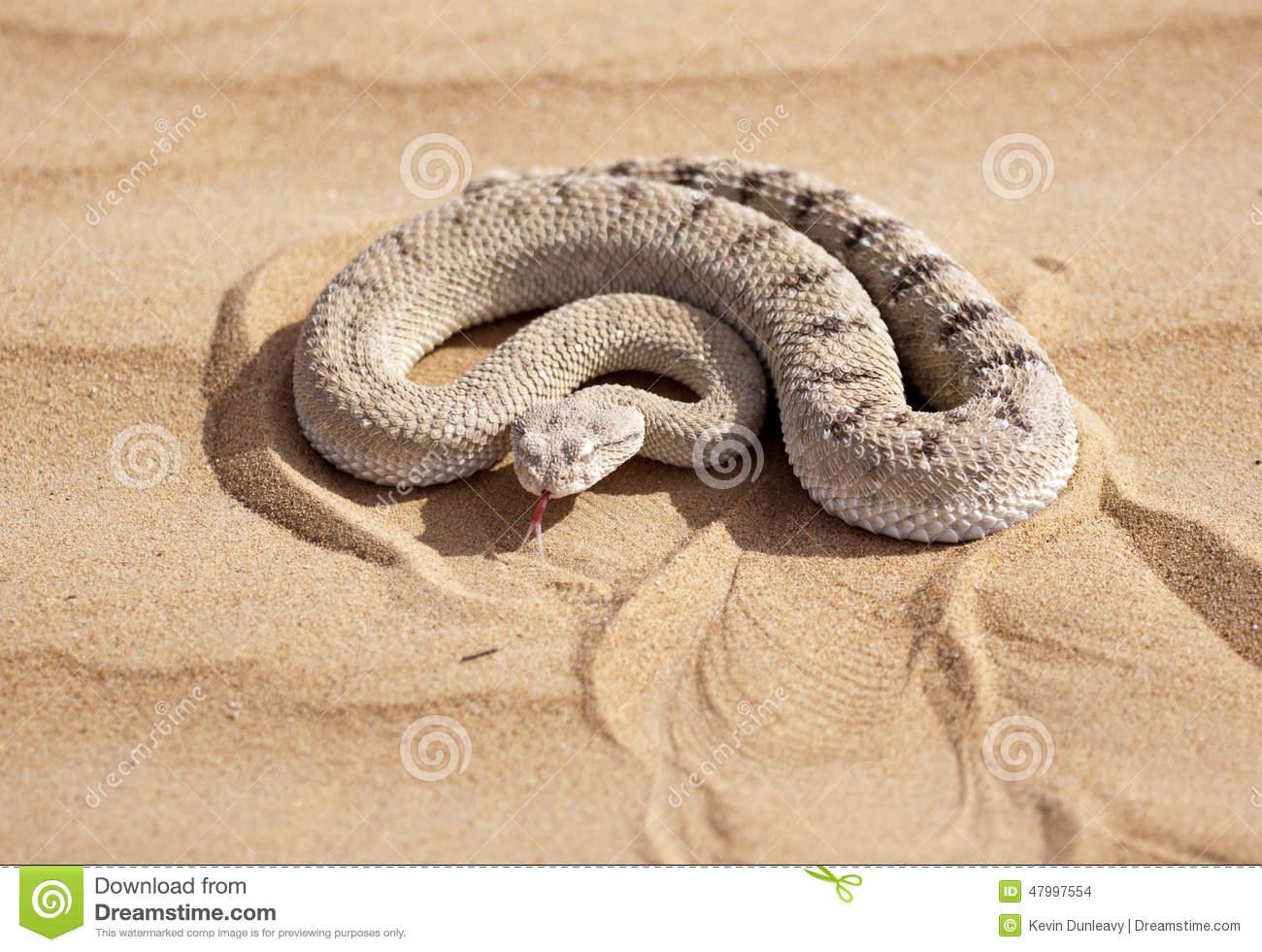 Horned viper clipart #15