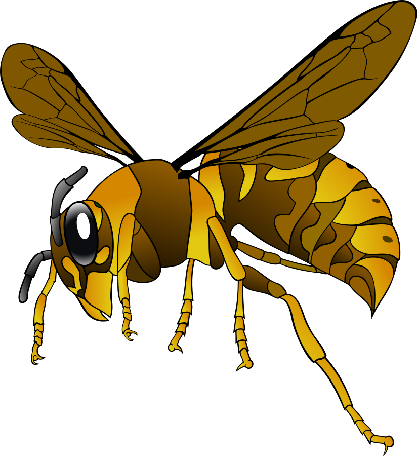 Free Hornet Clipart, Download Free Clip Art, Free Clip Art on.