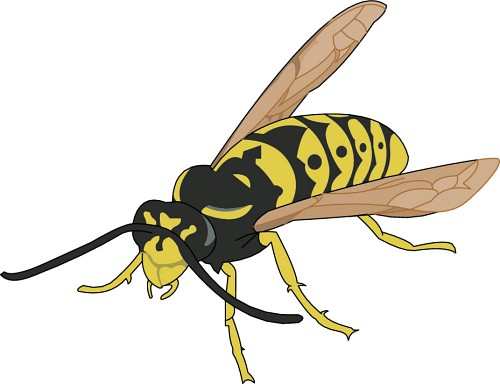 Free Wasp Cliparts, Download Free Clip Art, Free Clip Art on.