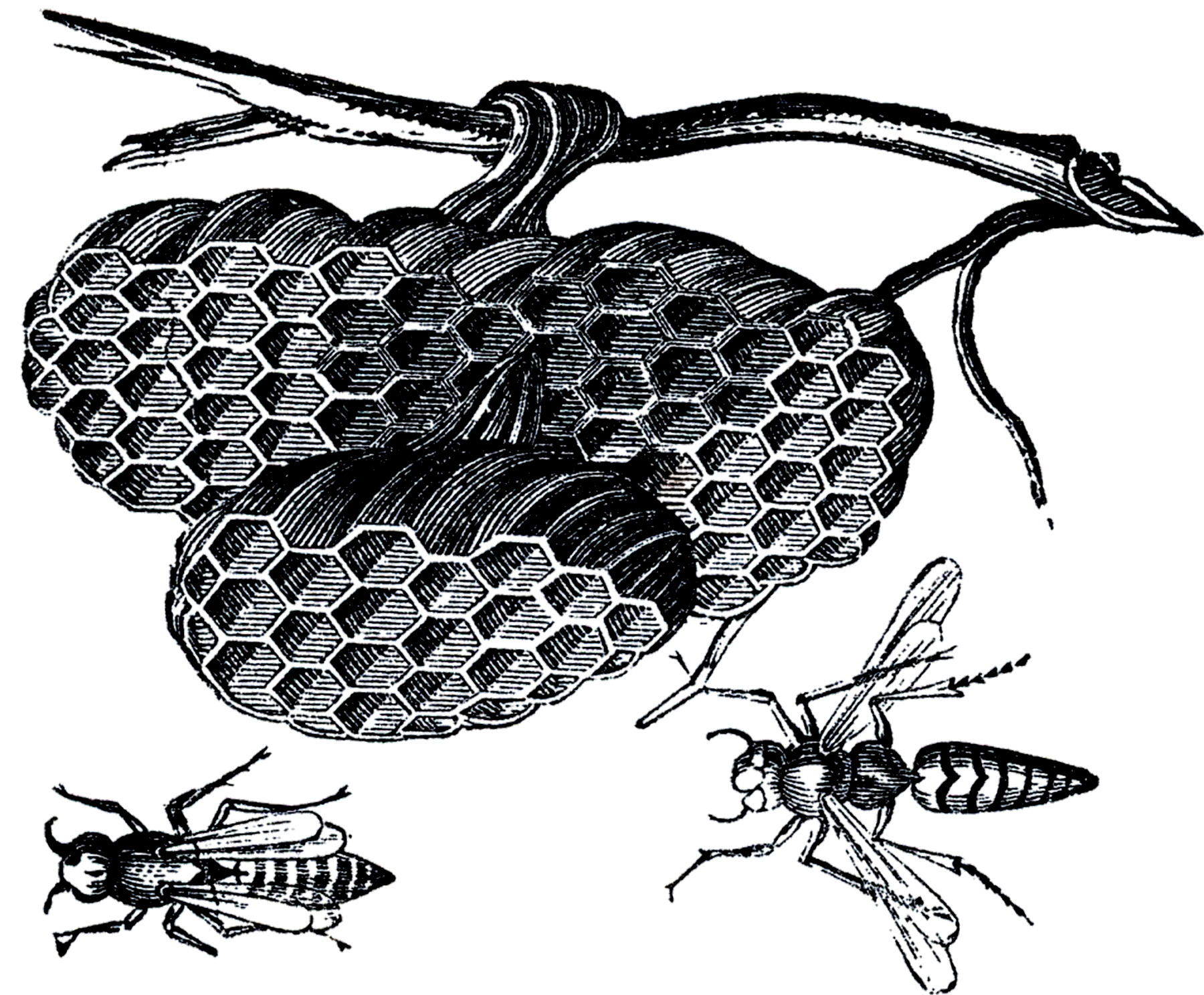 Vintage Wasp Nest Images.