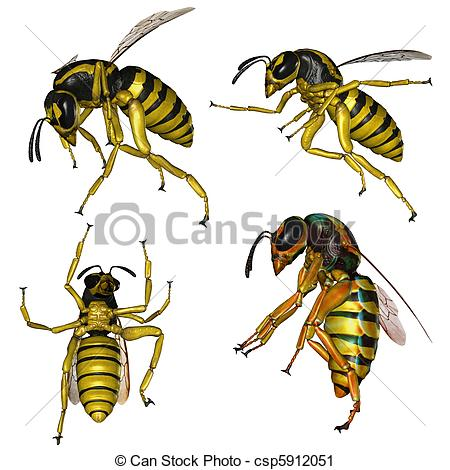 Wasp nest Stock Illustrations. 146 Wasp nest clip art images and.