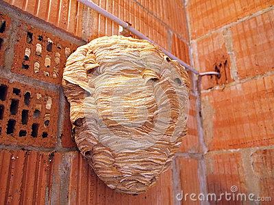 Hornets Nest Stock Photo.