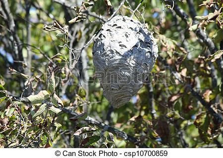 Stock Bilder von Hornissen, nest, baum.