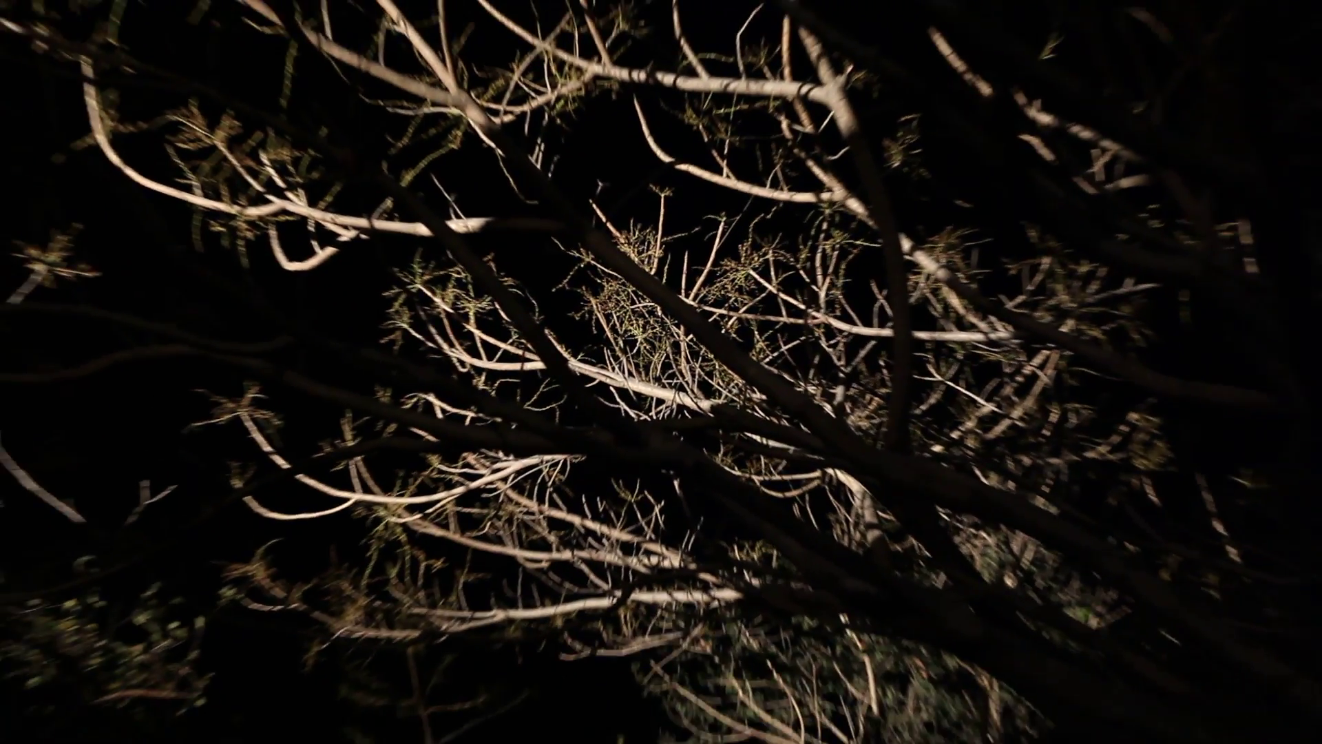 Horror effect shot of tree Stock Video Footage.
