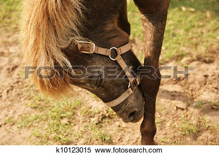 Stock Image of side portrait of horse bowing his head k10123015.