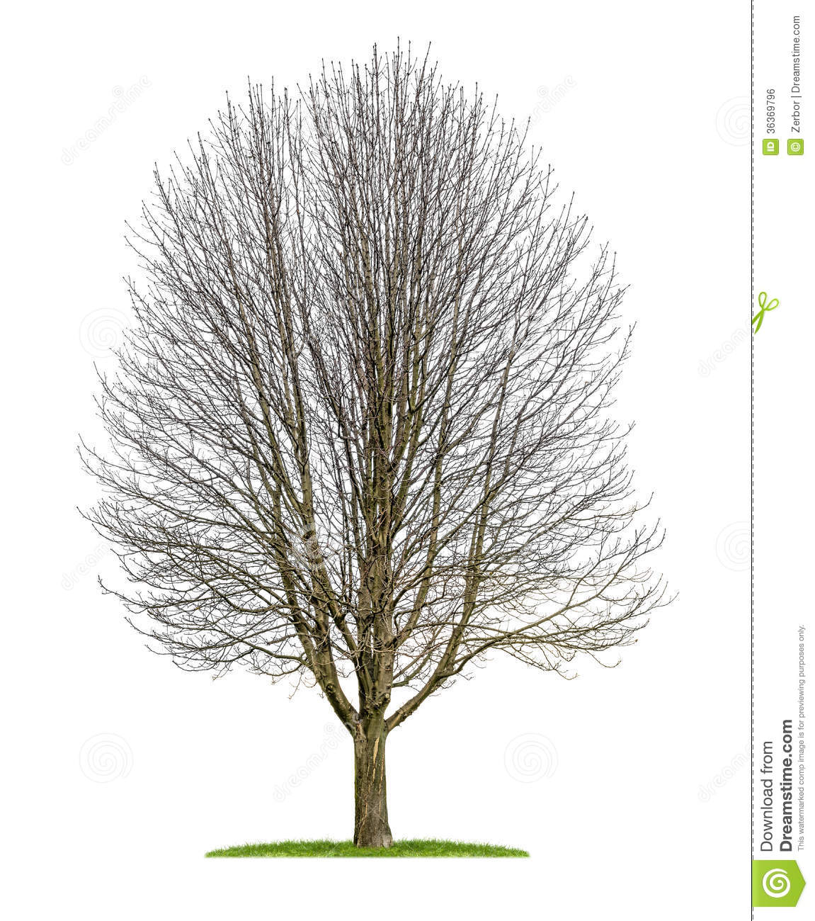 An Isolated Horse Chestnut Tree In The Winter Royalty Free Stock.