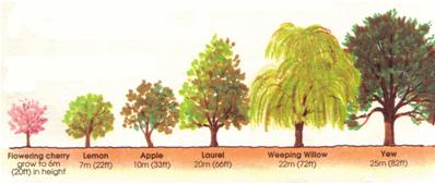 Horse Chestnut:: Habitat.