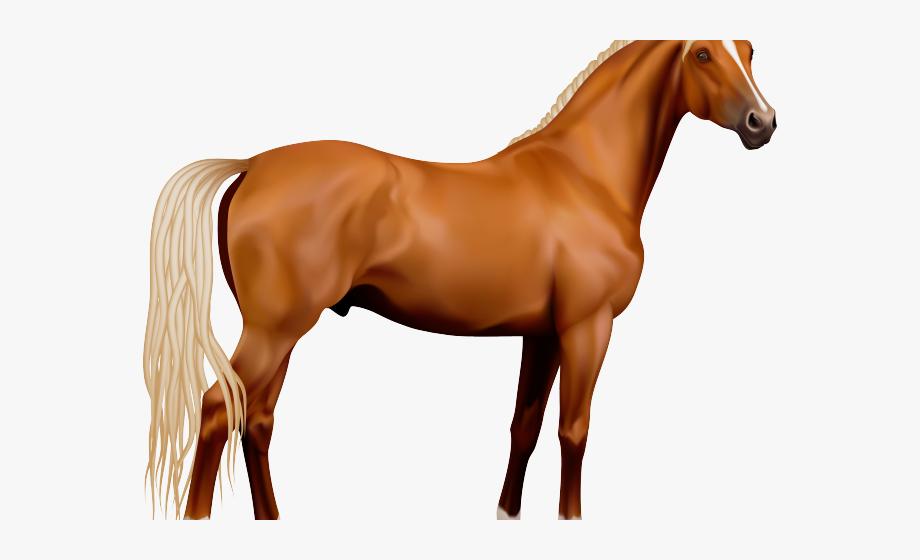 Pony Clipart Horse.