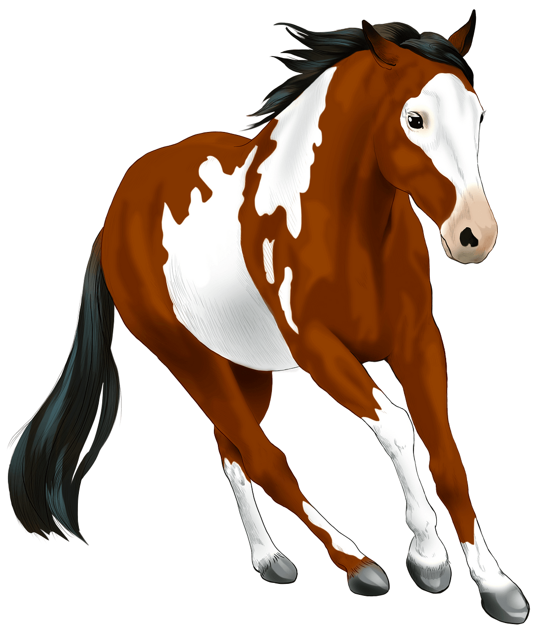American Paint Horse clipart. Free download..