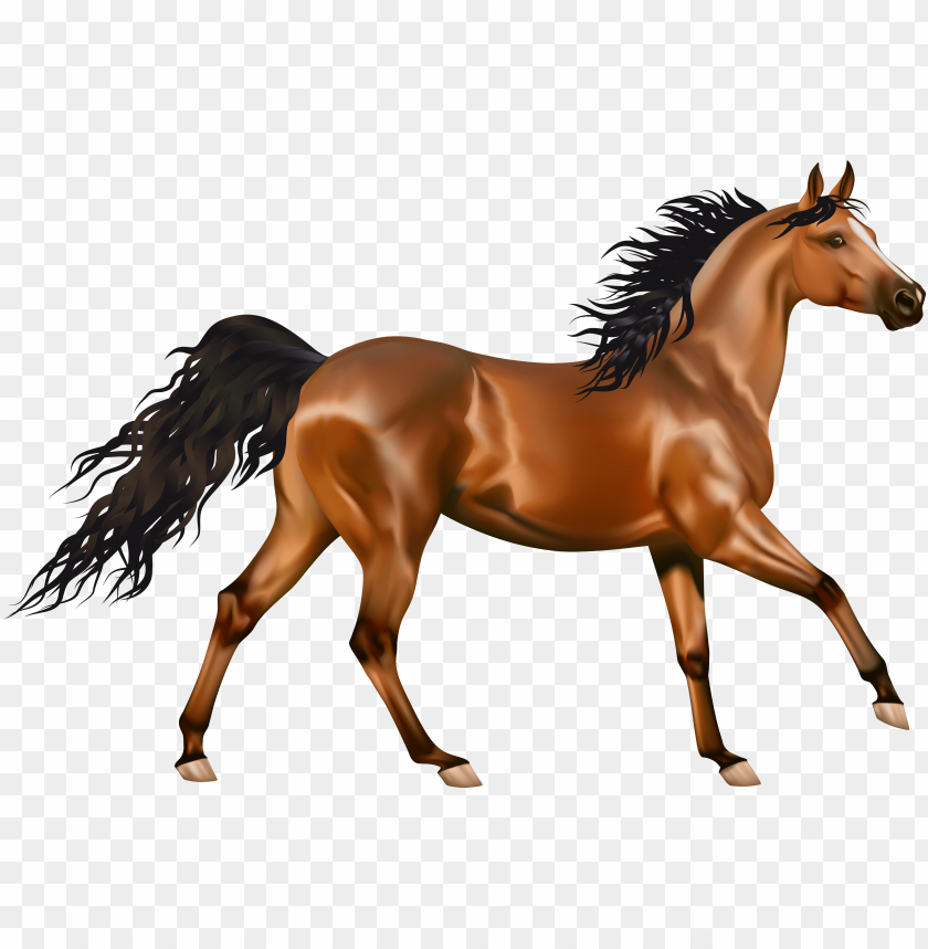 transparent brown horse png clipart.