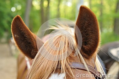 Horse Ears Royalty Free Stock Images.