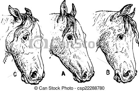 Vector of Horse ears, vintage engraving..