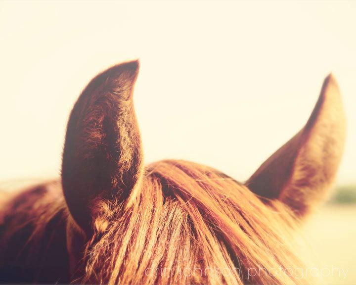 Horse ears clipart.