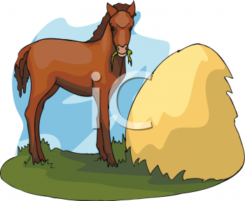 Clipart of A Baby Horse.
