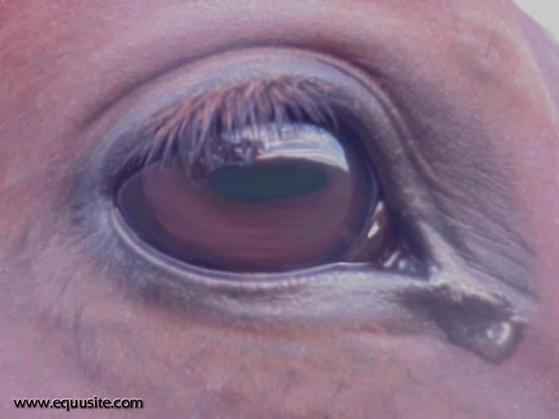 Equusite.com.