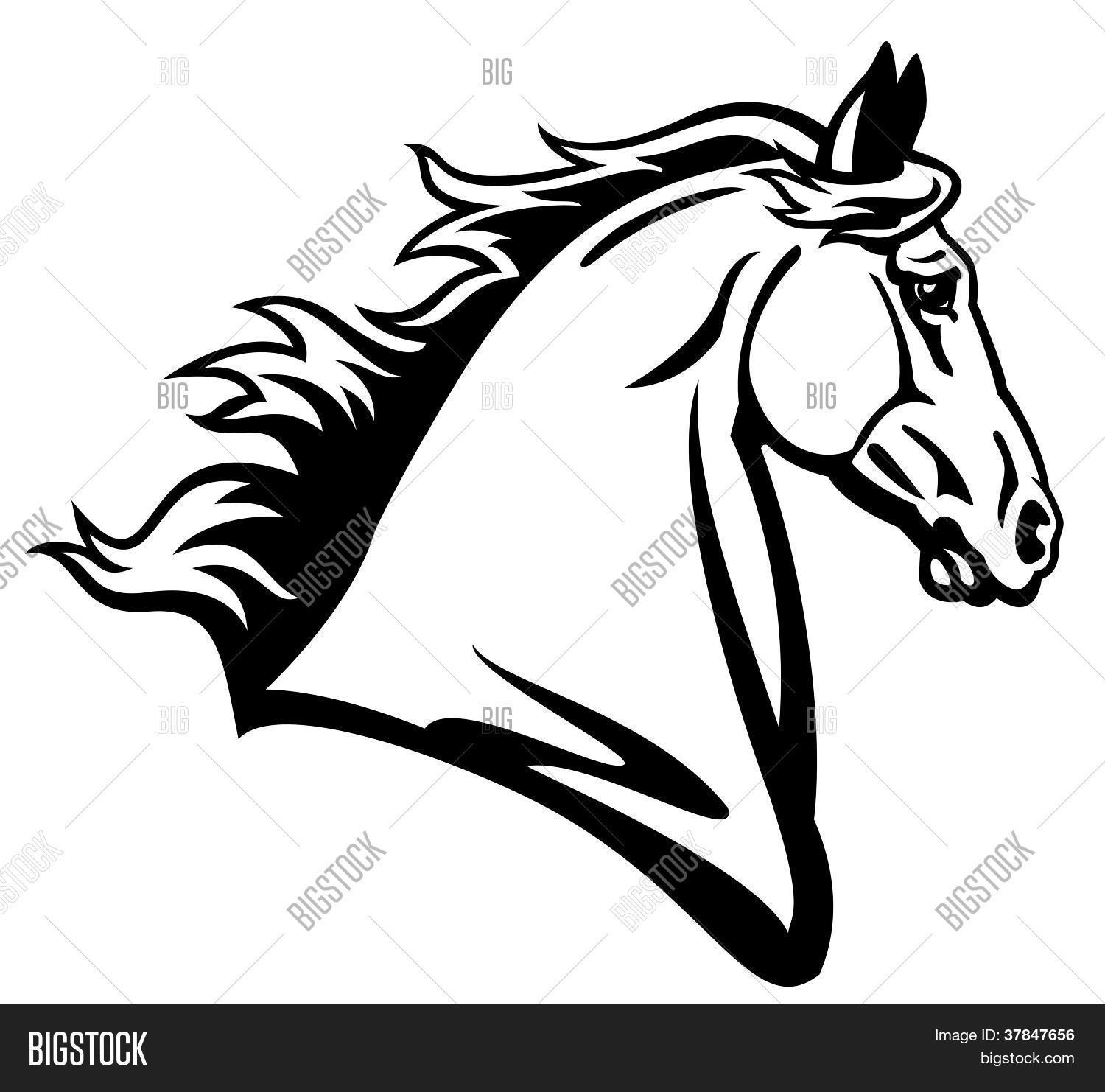 Horse Head Profile Vector & Photo (Free Trial).