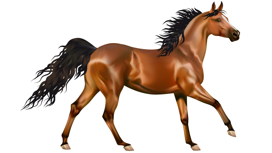Brown Horse Clip Art Wallpaer Hd 4700x2938 : Wallpapers13.com.