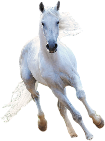 White Horse Png (98+ images in Collection) Page 1.