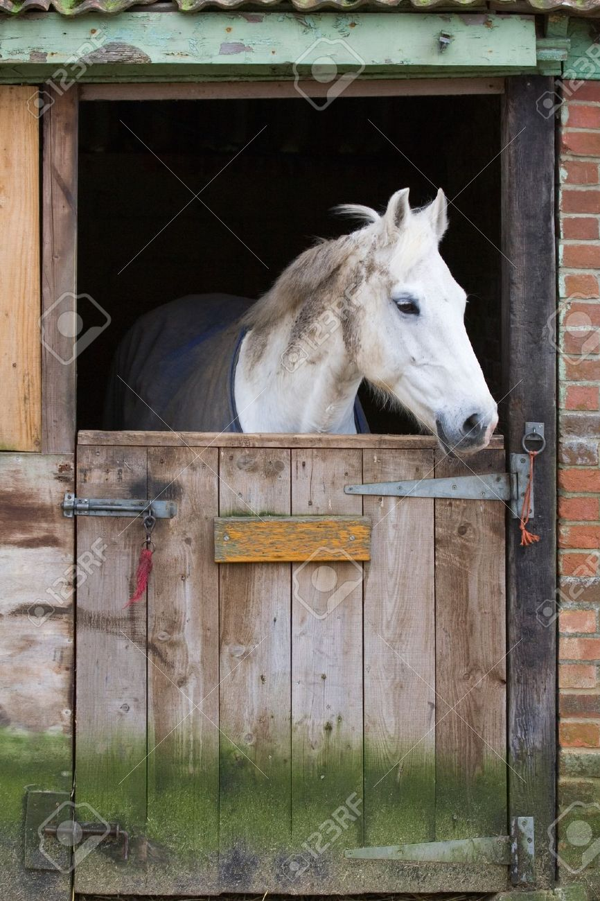 White Horse Behind A Wooden Stable Door Stock Photo, Picture And.