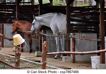 Stock Image of horse stable in Teruntum Kuantan Pahang Malaysia.