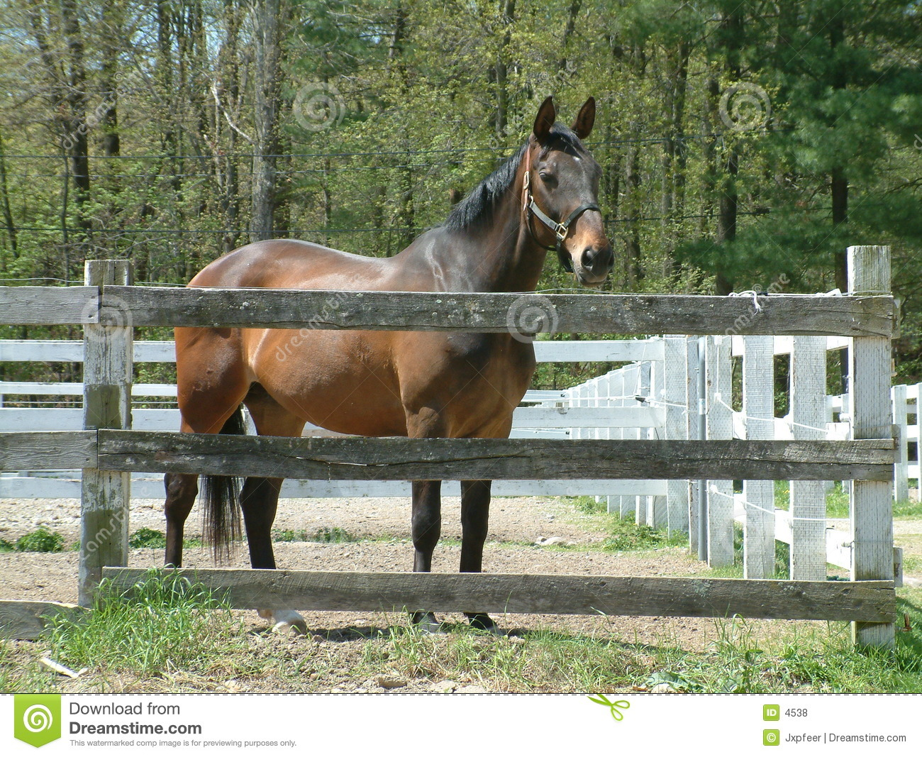 Brown Horse At The Stable Royalty Free Stock Photos.
