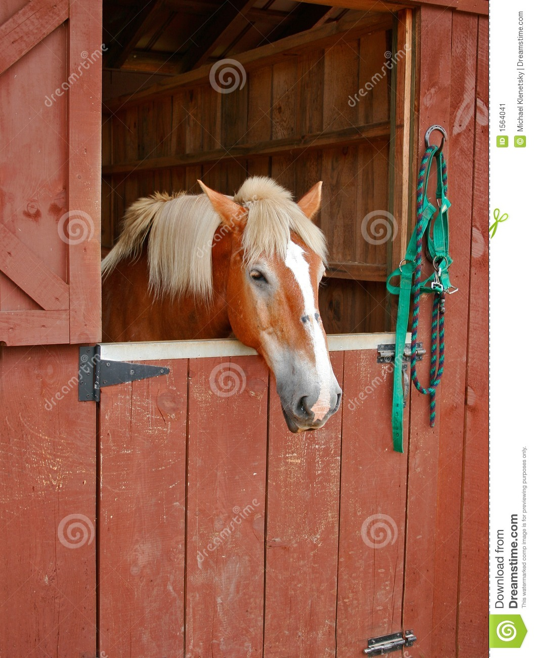 Horse In Stall Stock Image.
