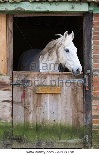 Horse Looking Out Stall Stock Photos & Horse Looking Out Stall.