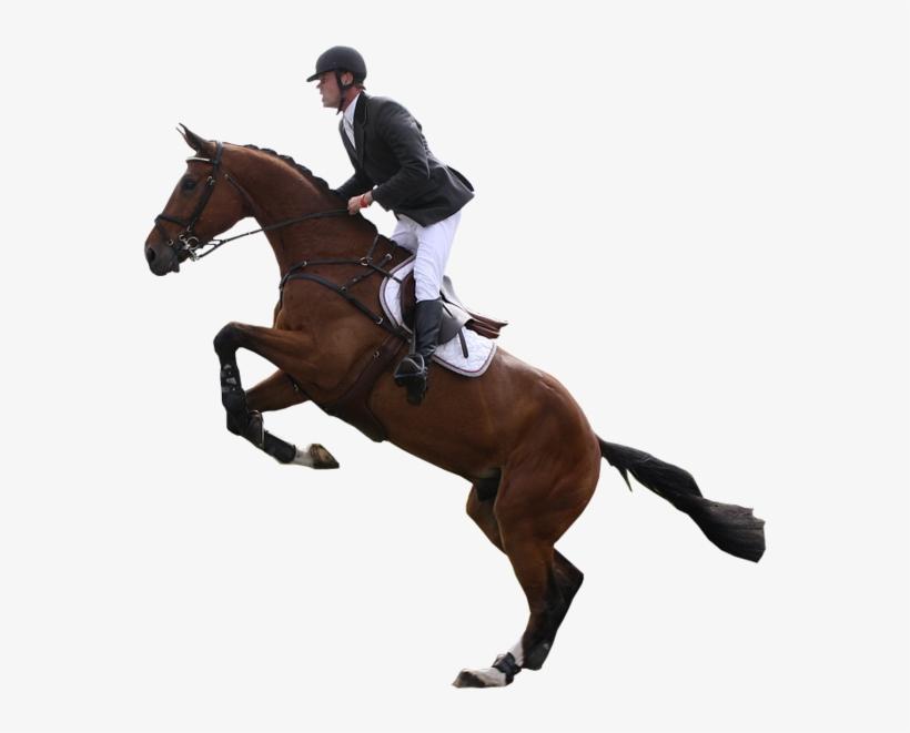 Horses Transparent Jumping.