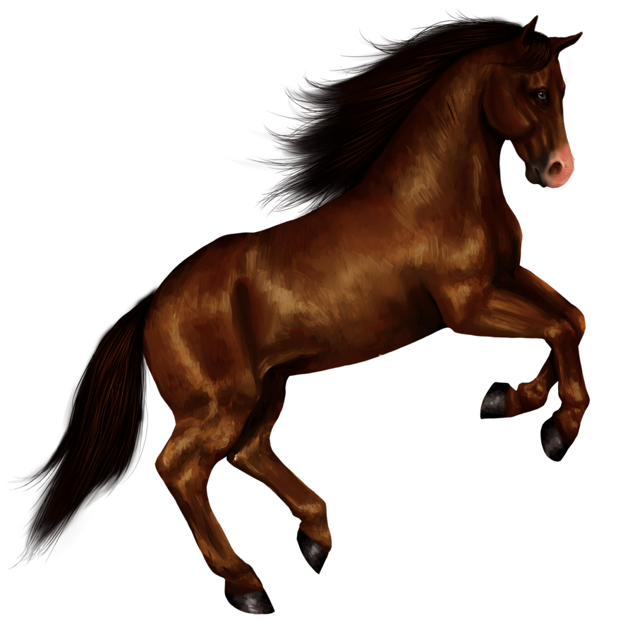 Horse Right Jump transparent PNG.