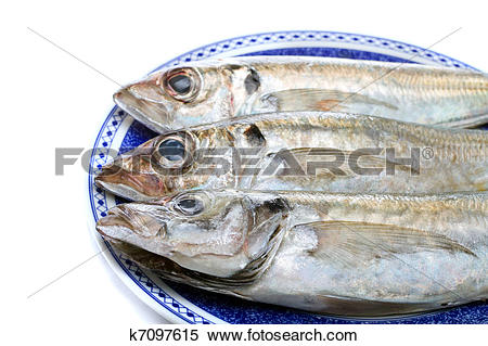 Stock Image of horse mackerel k7097615.