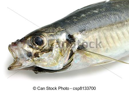 Stock Photography of fresh horse mackerel csp8133700.
