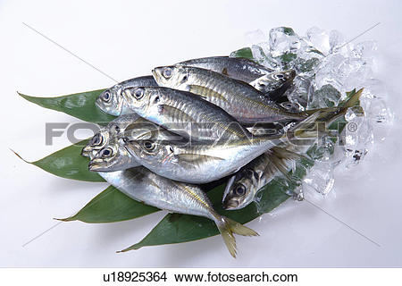 Stock Photo of Horse Mackerel u18925364.